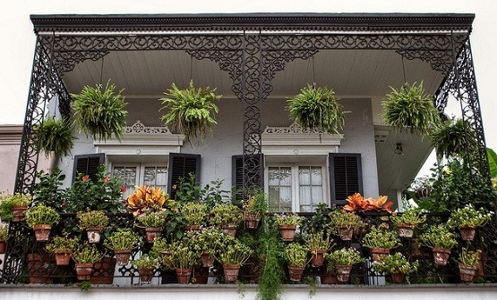 Potted plants terrace ideas